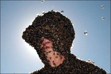 Ernst Köwing und seine Bienchen